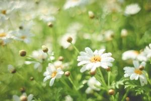 picjumbo.com_HNCK2281